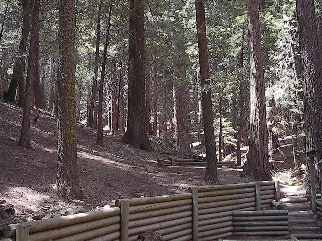 Backyard (property borders Sequoia Nat'l Forest)
